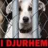 I Djurhem