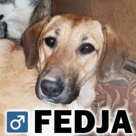 Fedja, 1 år