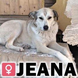 Jeana, 2 år (vaccinerad, steriliserad)