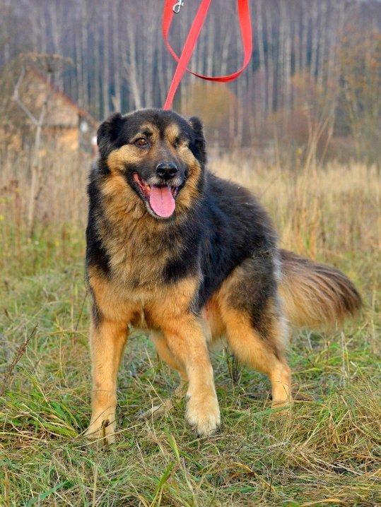 Mishka, 4 år