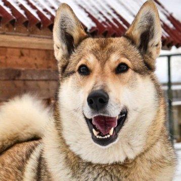 🙏 Hund i nöd! ♀ Liza, 4 år. LÄS MER... (Vaccinerad, steriliserad)